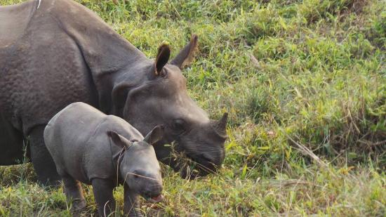 The Central Zoo: Mother and Baby Rhino