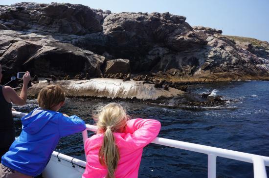 Triabunna, ออสเตรเลีย: seal colony