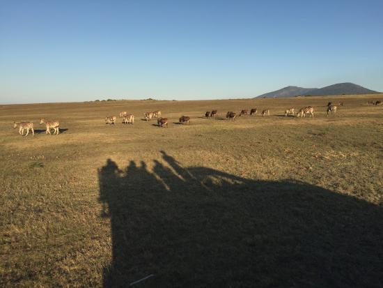Альбертина, Южная Африка: photo2.jpg
