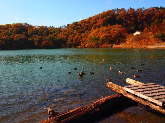 Osaki, ญี่ปุ่น: ボートにも乗れるようです