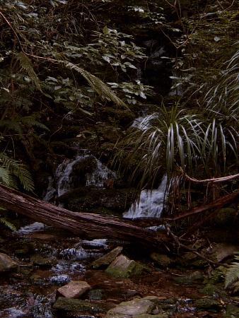 Picton, Nueva Zelanda: queen charlotte,s track