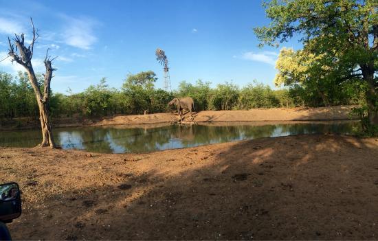 Timbavati Private Nature Reserve, Güney Afrika: photo1.jpg