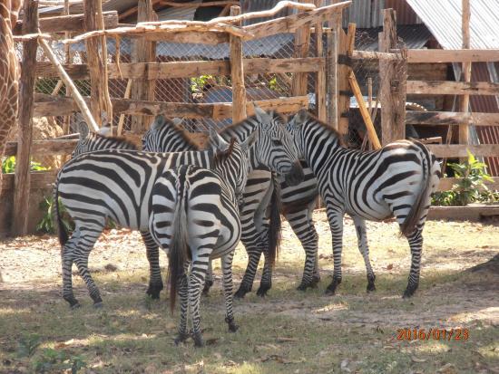 Busuanga Island, ฟิลิปปินส์: calauit safari tour