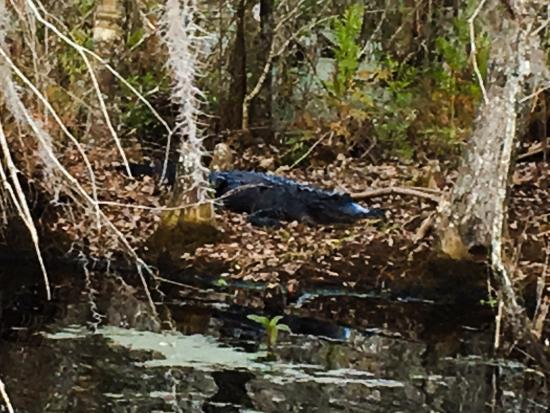 Swamp Fever Airboat Adventures: photo1.jpg