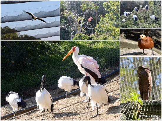 Selwo Aventura: Вольер с птицами, куда можно зайти