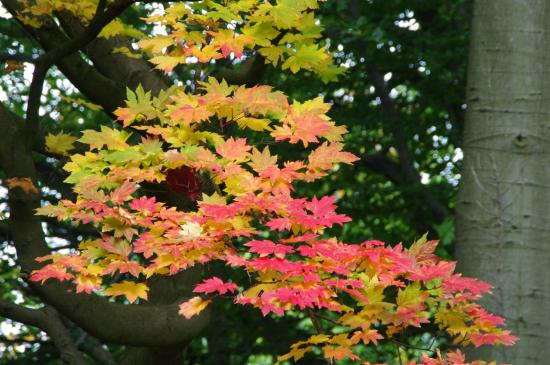 Bedale, UK: Autumnal colour