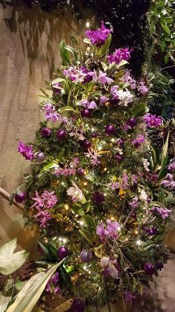 Belmont, Северная Каролина: Christmas at the botanical gardens