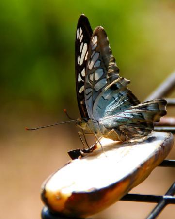 Butterfly Complex Center: Relaxing