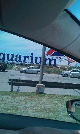 Фотография Punta Mogotes