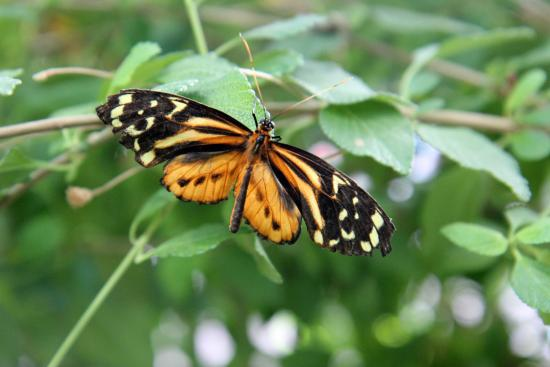 Museum Of Science: The Butterfly Garden
