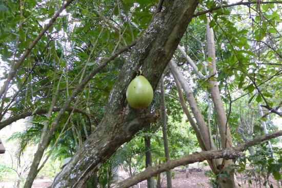 Ua Huka, Fransk Polynesien: im Botanischen Garten