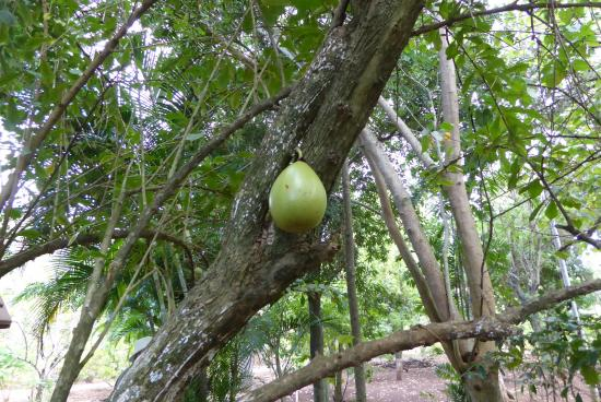 Ua Huka, French Polynesia: im Botanischen Garten