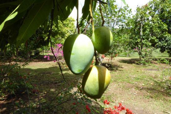 Уа-Хука, Французская Полинезия: im Botanischen Garten