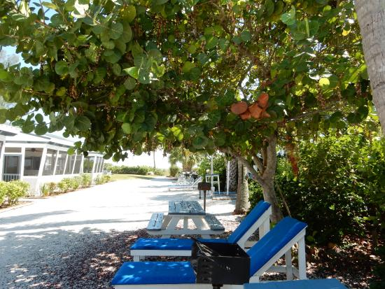 Room 9 patio Picture of Tropical Winds Motel & Cottages Sanibel