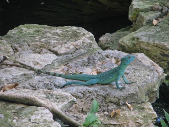 Toledo, OH: Zoo