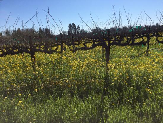 Forestville, CA: photo6.jpg