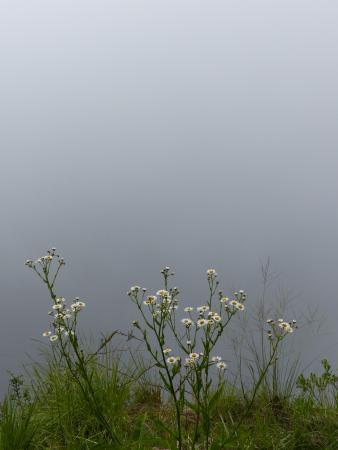 南大河州照片