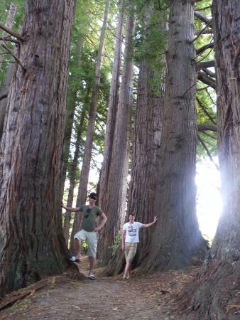 Hamurana, Nueva Zelanda: of waren ze er toch die kabouters? ;-)