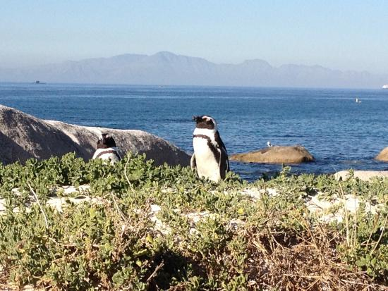Beautiful Cape Town Tours : photo2.jpg