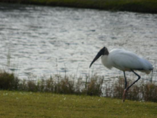 Eagle Ridge Golf Club : Wildlife