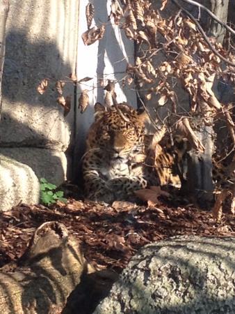 Tigre picture of menagerie du jardin des plantes paris for Animalerie du jardin des plantes