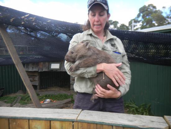 Wintersun Gardens Motel: Bicheno ZOO - opiekunka z wombatem