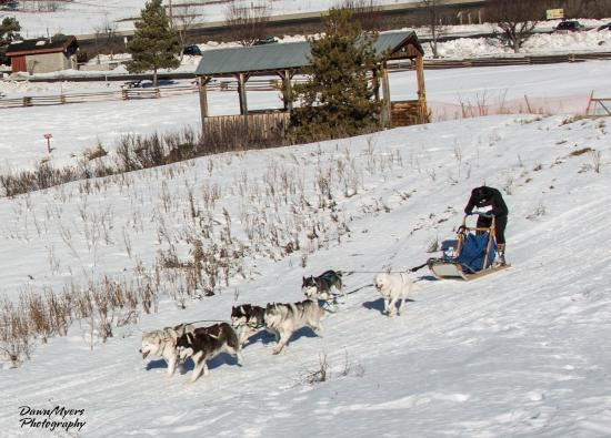 100 Mile House, Kanada: Jan 30/16 Dog Sleigh races at the Heritage Park