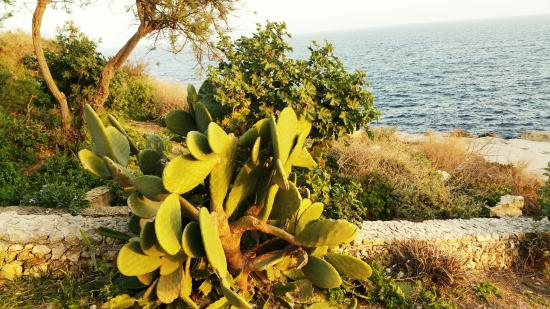 Adventures In Malta