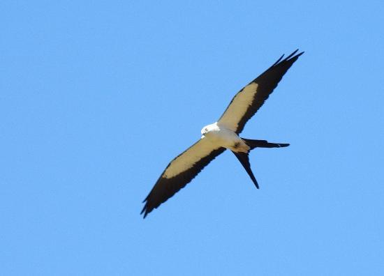San Vito, Costa Rica: Fågelskådning från trädgård och altan