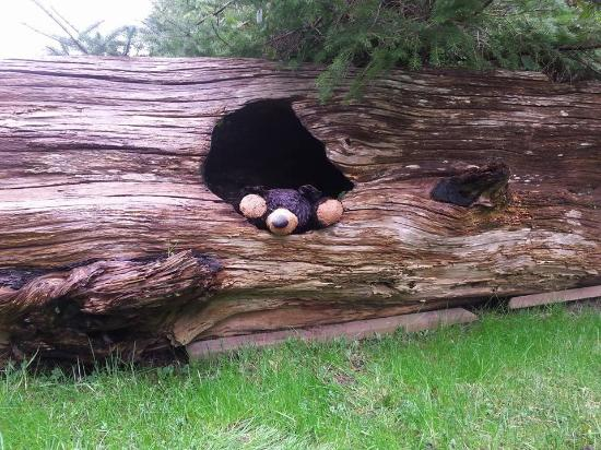 Whale's Tail Guest Suites: room 303 had a cute log outside with a hibernating bear :)