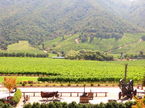 Santa Cruz, Chile: Vista dos vinhedos