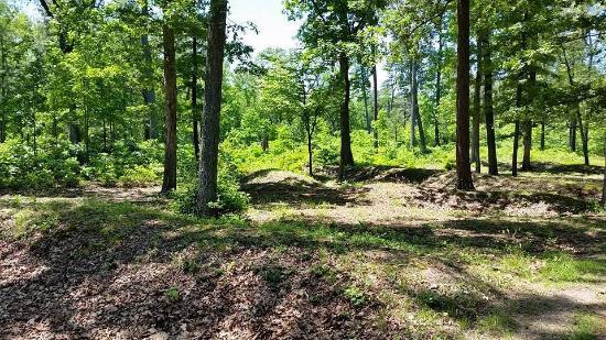 Mechanicsville, فيرجينيا: Cold Harbor Battlefield
