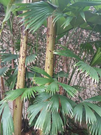 0213161128 Picture Of Greater Des Moines Botanical Garden Des Moines Tripadvisor
