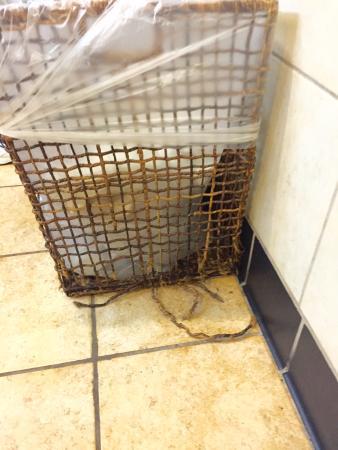 Lynnwood, WA: My trash can looks better.