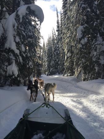 Sun Peaks, Canadá: What a great experience - was so lucky to meet the new puppies - thoroughly recommend this exper