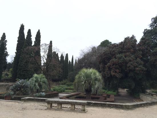 Picture of jardin des plantes montpellier tripadvisor - Jardin d essence montpellier ...