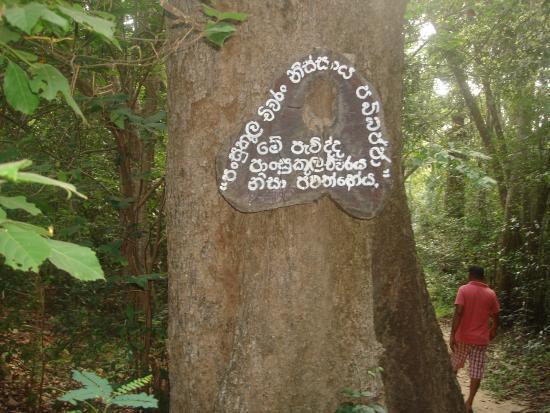 Kudumbigala Monastery: Meditation areas