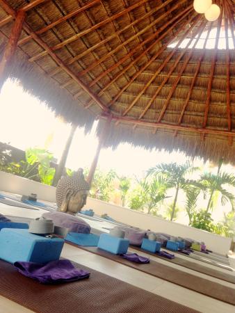 Meg DeClerck Yoga: Red Buddha Yoga & Wellness