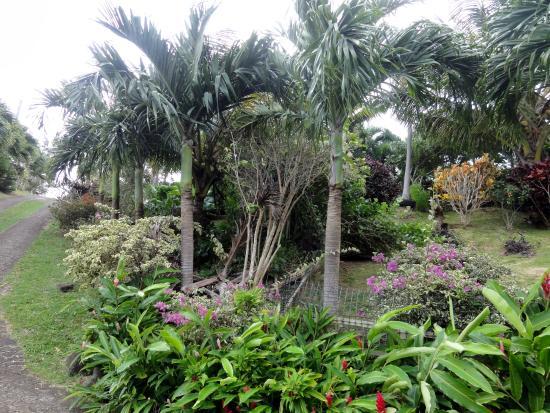 Attractive Palm Tree Gardens Botanical Garden: Palm Tree Gardens