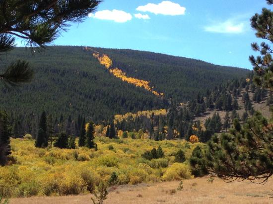 Rams Horn Village Resort: In some places in RMNP the hillsides can look like a river of gold