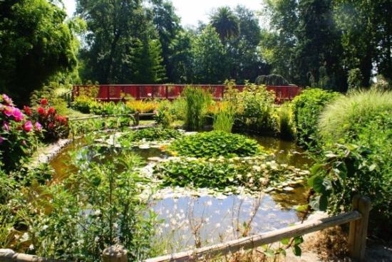 les bassins photo de jardin des plantes saint cyprien tripadvisor. Black Bedroom Furniture Sets. Home Design Ideas
