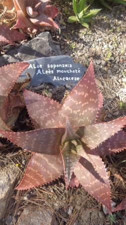 Roquebrun, Francia: plantes