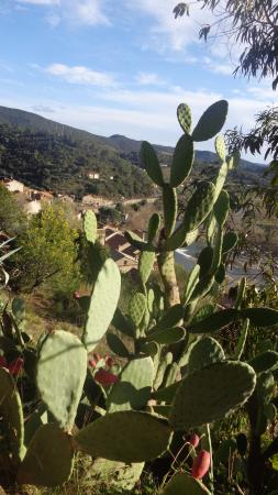 Jardin Mediterraneen