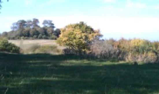 Little Wittenham Nature Reserve