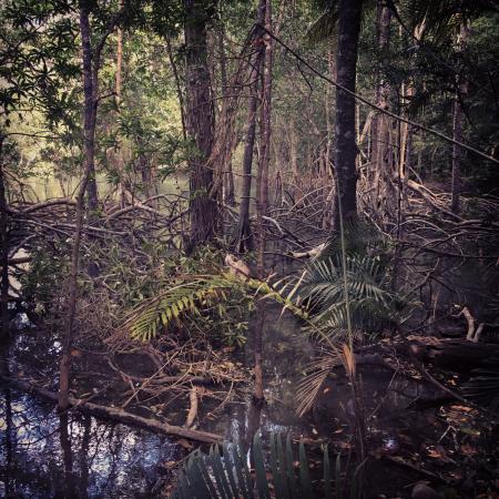 Nicoya, Costa Rica: Curu National Wildlife Refuge mangrove