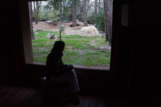 en pleine discussion avec les otaries photo de zoo de la fl che la fl che tripadvisor. Black Bedroom Furniture Sets. Home Design Ideas