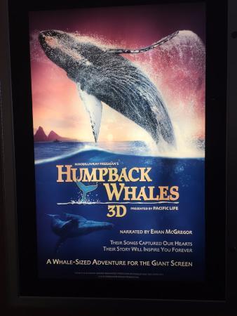 Simons IMAX Theatre at New England Aquarium : Movie poster
