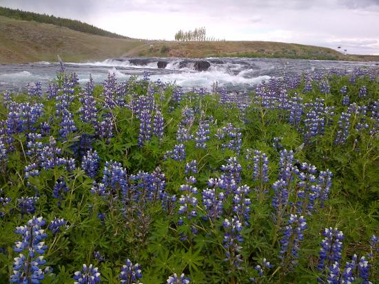 Riding Tours South Iceland: Natuur