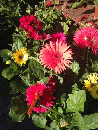 Flores de todos os tipos picture of winter park farmer 39 s - Tipos de plantas ...