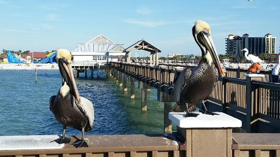 20160214 164256 picture of pier 60 clearwater for Clearwater fishing pier